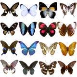 美丽的热带蝴蝶的汇集 库存照片