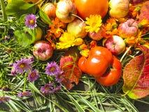 美丽的照片用苹果、红色叶子、在木背景的花金盏草和草本 图库摄影