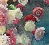 美丽的照片美好的珊瑚在海 图库摄影