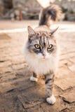 美丽的爱拥抱白色灰色猫室外街道 免版税库存照片