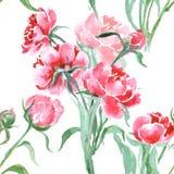 美丽的牡丹开花,绘无缝的样式的水彩 免版税库存图片