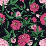 美丽的牡丹无缝的样式 手拉的开花开花,芽和叶子 五颜六色的概念例证松弛假期向量 皇族释放例证