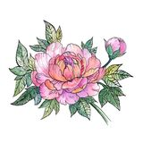 美丽的牡丹花,牡丹花束,纹身花刺 免版税图库摄影