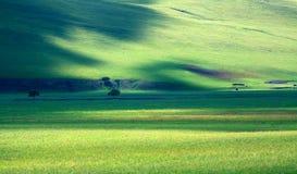 美丽的牧场地 免版税图库摄影