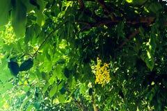 美丽的特写镜头紫色黄色红色和橘黄色花在室外绿色的公园 库存图片