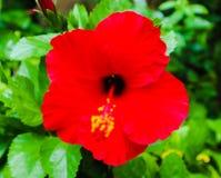 美丽的特写镜头紫色黄色红色和橘黄色花在室外绿色的公园 免版税库存图片