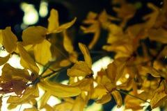 美丽的特写镜头紫色黄色红色和橘黄色花在室外绿色的公园 免版税图库摄影