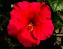 美丽的特写镜头红色花在室外绿色的公园 库存照片