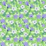 美丽的狂放的会开蓝色钟形花的草开花无缝的样式1 库存图片