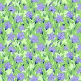 美丽的狂放的会开蓝色钟形花的草开花无缝的样式3 免版税库存图片