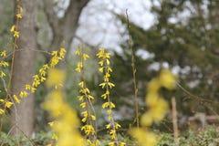 美丽的狂放的黄色花 免版税图库摄影