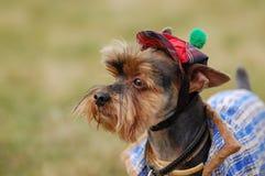 美丽的狗 免版税库存照片