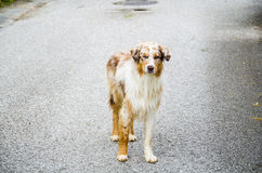 美丽的狗 库存图片