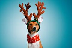 美丽的狗wering的圣诞节服装 图库摄影