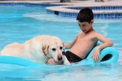 美丽的独特的金毛猎犬放松在水池的拉布拉多狗和男孩在一张浮动床上,尾随超级滑稽 免版税库存照片