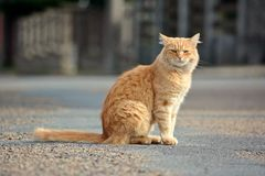美丽的猫在街道上看 免版税库存照片