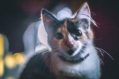 美丽的猫早晨 免版税库存照片