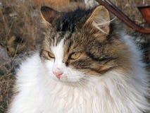 美丽的猫纵向 库存图片