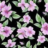 美丽的玫瑰果开花与在黑背景的叶子 无缝花卉的模式 多孔黏土更正高绘画photoshop非常质量扫描水彩 皇族释放例证