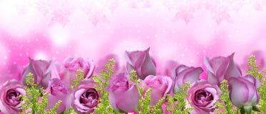 美丽的玫瑰背景横幅 免版税图库摄影