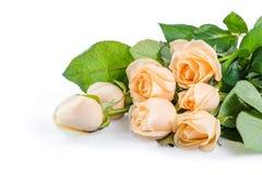 美丽的玫瑰色花03 图库摄影