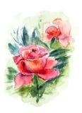 美丽的玫瑰花 图库摄影