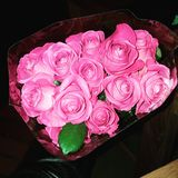 美丽的玫瑰 库存照片