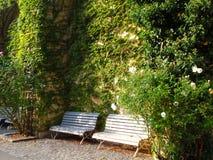 美丽的环境美化的庭院充分美丽的开花的花和装饰树和喷泉 库存照片