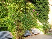 美丽的环境美化的庭院充分美丽的开花的花和装饰树和喷泉 库存图片