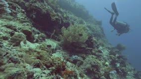 美丽的珊瑚礁、鱼和轻潜水员游泳的水中在蓝色海 水下的射击的珊瑚礁和鱼 影视素材