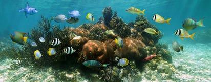 珊瑚礁的水下的全景 免版税库存图片