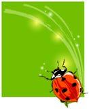 美丽的瓢虫 免版税库存图片