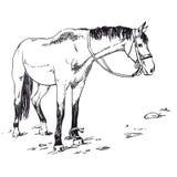 美丽的疾驰的阿拉伯马的概述例证 库存图片