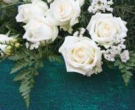 美丽的白玫瑰开花 库存图片