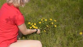 美丽的白肤金发的女孩撕毁蒲公英花 春天开花的蒲公英 股票录像