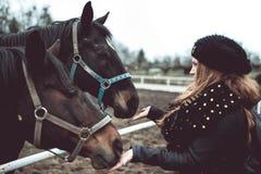 美丽的白肤金发的女孩从手喂养一匹大棕色马 免版税库存图片