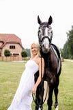 美丽的白肤金发的妇女和灰色马画象在婚礼 图库摄影