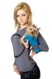 美丽的白肤金发的查出的摆在的小狗 免版税库存图片