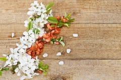 美丽的白色开花的樱桃树特写镜头照片分支 在葡萄酒木backg的婚礼、订婚或者订婚概念 库存图片