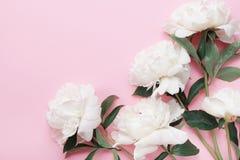 美丽的白色牡丹开花在桃红色淡色台式视图和平展位置样式的花束 库存图片