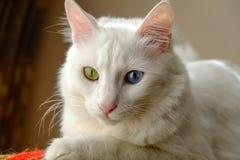 美丽的白色猫观看的街道 免版税图库摄影
