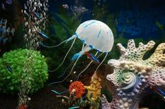 美丽的白色水母在蓝色背景的水中 免版税库存照片