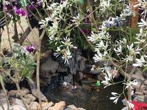美丽的白色&紫色花 免版税库存照片