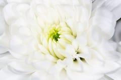 美丽的白花作为背景 特写镜头 库存照片