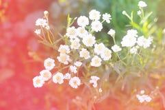 美丽的白花在庭院里 免版税库存照片