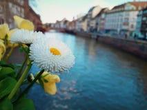 美丽的白花特写镜头在桥梁的在史特拉斯堡,法国,阿尔萨斯 库存图片
