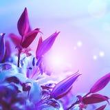 美丽的百合花开花的花束方形的背景 8个看板卡eps文件招呼的包括的模板 被定调子的图象 分行明亮的开花的绿色本质春天结构树 免版税图库摄影