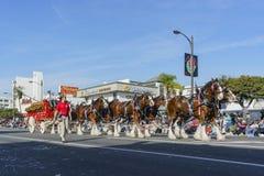 美丽的百威的在著名罗斯游行的载马的车辆 图库摄影