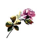 美丽的百花香的传染媒介与花玫瑰和芽的 库存图片