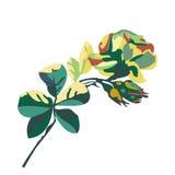 美丽的百花香的传染媒介与花玫瑰和芽的 库存照片